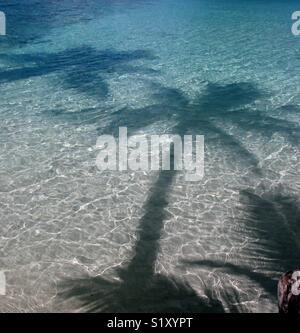 Schatten der Palmen sind in den Untiefen von einem Strand in den USA Virgin Inseln gesehen. - Stockfoto