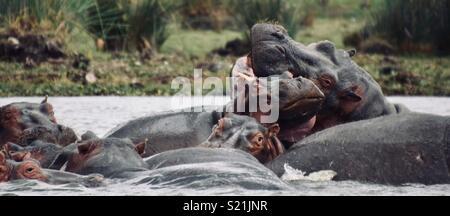 Flusspferde in Lake Naivasha - Stockfoto