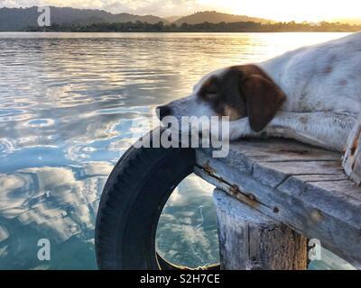 Hund schlafen am Ende einer Anlegestelle mit dem Sonnenuntergang über ruhiges Meer - Cristobal Island, Bocas del Toro, Panama - Stockfoto