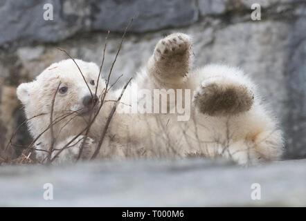 Berlin, Deutschland. 16 Mär, 2019. Der kleine Eisbär zeigt sich erstmals für die Besucher in den Zoo. Credit: Paul Zinken/dpa/Alamy leben Nachrichten - Stockfoto