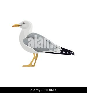 Die gemeinsame seagull Mew Gull europäischen Silbermöwe. Vector Illustration. Element für Ihr Design. Ruhe neugierig stehend Sea Bird - Stockfoto