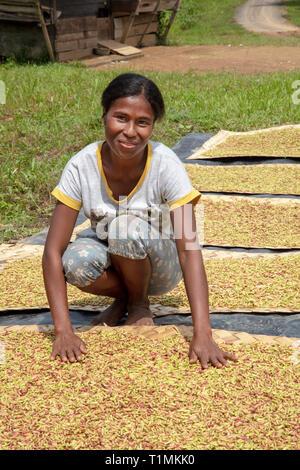Indigene Alfur Frau der Nuaulu Gruppe mit dem Trocknen Nelken, Seram Insel, Molukken, Indonesien - Stockfoto