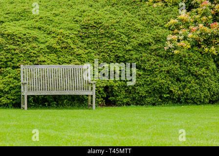 Classic Holz Garten Bank vor einer großen Box, Buxus sempervirens, Hecke, mit Gras und blühenden Japanischen Andromeda, Pieris japonica, Strauch - Stockfoto