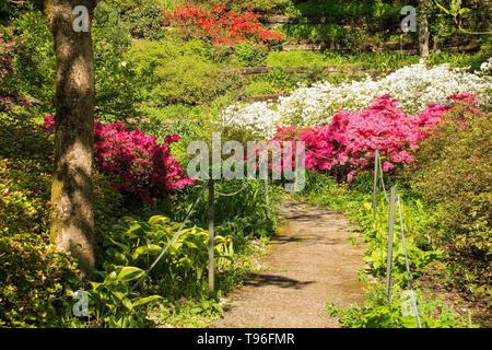 Ein Park im Nordosten der Region Friuli Venezia Giulia Italien im Frühjahr mit vielen Azaleen in Blume - Stockfoto