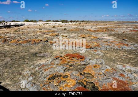 Hamelin Pool Marine Nature Reserve ist eine geschützte Meeresschutzgebiet im UNESCO Weltkulturerbe entfernt - der Shark Bay aufgeführt - Stockfoto