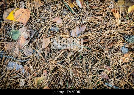Hintergrundbild: Nadelholz Nadeln und gelben Blätter im Herbst liegen auf dem Boden. - Stockfoto