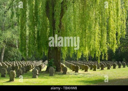 Stein Kreuze unter Trauerweide, Kriegsgräber, Hauptfriedhof, Dortmund, Nordrhein-Westfalen, Deutschland - Stockfoto