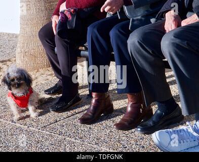 Ältere Leute sitzen auf einer Bank mit einem kleinen Hund - Stockfoto