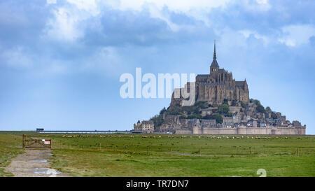 Schafe auf einem Feld mit Le Mont St-Michel im Hintergrund an einem bewölkten Tag - Stockfoto