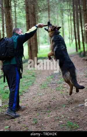 Deutscher Schäferhund Hund (Canis lupus f. familiaris), man spielt mit einem Hund im Wald, Deutschland - Stockfoto
