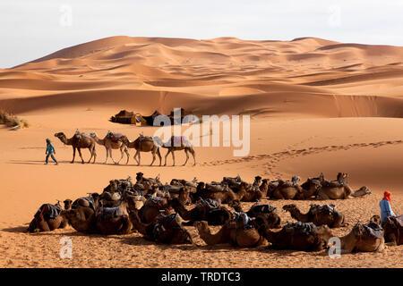 Wohnwagen in der Wüste Erg Chebbi, Marokko - Stockfoto
