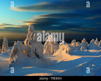 Schneebedeckte Bäume im Abendlicht, Deutschland, Sachsen, Erzgebirge - Stockfoto