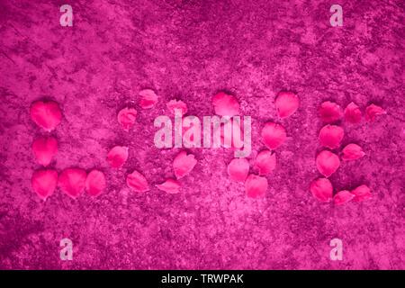 Rosenblätter auf einem rosa Hintergrund. Liebe Wort von Blume Blütenblatt - Stockfoto