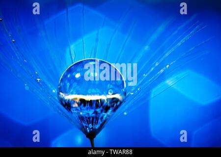 Schöne Tautropfen auf einem Löwenzahn Samen. Makro. Wunderschönes weiches Licht blau und violett unterlegt. Selektive konzentrieren. Hintergrund mit kopieren. - Stockfoto