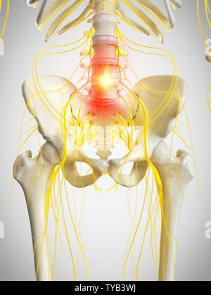3D-gerenderte Medizinisch genaue Abbildung der pelvinen Nerven - Stockfoto