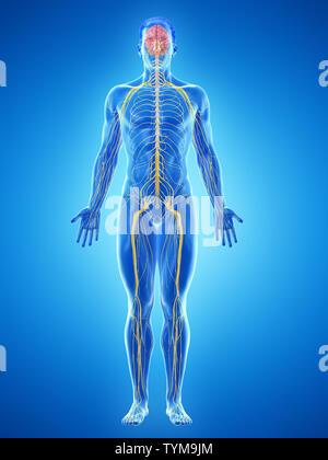 3D-gerenderte Medizinisch genaue Abbildung eines mans Nerven - Stockfoto