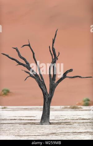 Toter Baum und roten Sanddünen im Deadvlei, Namib-Naukluft-Nationalpark, Namibia - Stockfoto