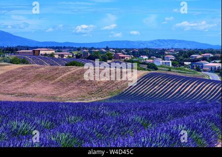 Frankreich, Provence, Valensole. Juni 2016. Auf dem Plateau de Valensole Ebene ist es möglich, das Schauspiel der Lavendel blüht in einem einzigartigen Rahmen in die Welt zu genießen - Stockfoto