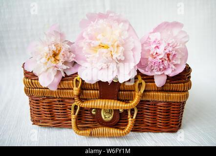 Drei schöne rosa Pfingstrosen liegen auf einem Holz- Koffer. Schöne Komposition. Close-up. - Stockfoto