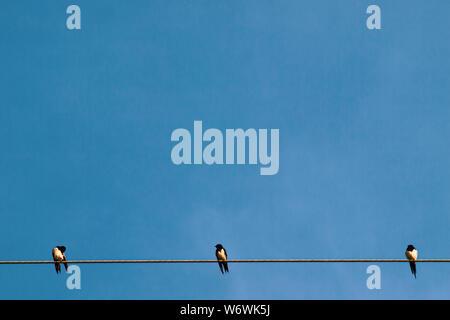 Silhouette ein Paar oder Paar Vögel auf Strom- Linien. Clear Sky in den Sonnenaufgang oder Sonnenuntergang Beleuchtung Hintergrund - Stockfoto
