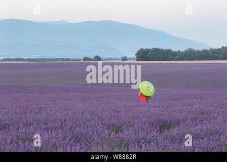 Eine Frau steht in einem Feld von Lavendel auf dem Plateau de Valensole, Provence, Frankreich. - Stockfoto