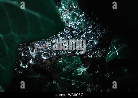 Makroaufnahme der Regentropfen auf einem Spinnennetz im Ivy - Stockfoto