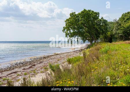 Blick von der Küste über Holzpfähle im Wasser der Ostsee - Stockfoto
