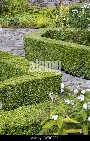 Box Hedge, buxus sempervirens, in einem Englischen Garten in Großbritannien - Stockfoto