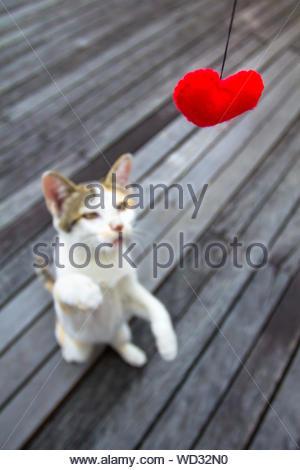 Katze, die versuchen, die Liebe zu fangen - Stockfoto