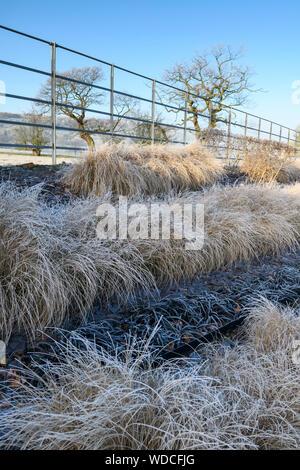 Staudenbeet mit stilvollen, modernen Design, Schiefer Chips & Zeilen von Gräsern (frosty sonnigen Wintertag) - privater Garten, Yorkshire, England, UK. - Stockfoto