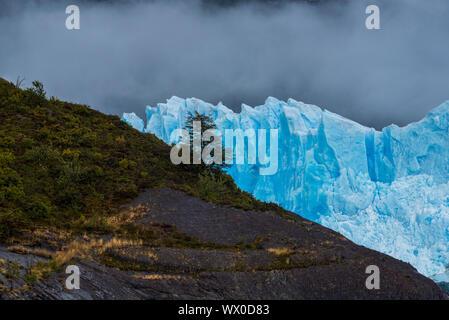 Einsamer Baum gegen Gletscher Perito Moreno im Nationalpark Los Glaciares, UNESCO-Weltkulturerbe, Provinz Santa Cruz, Patagonien, Argentinien, Sou eingestellt - Stockfoto