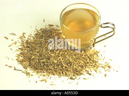 Quecken Wurzel Tee Elymus Repens Heilpflanze - Stockfoto