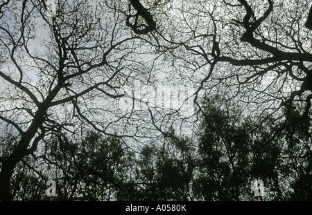 Stimmungsvolle Silhouette der Bäume im Spätherbst - Stockfoto