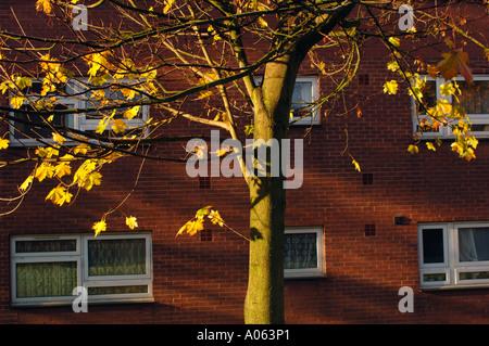 Herbstliche Kontraste - Stockfoto