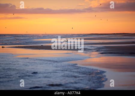 Hund am Strand im Morgengrauen Bamburgh Northumbia England UK - Stockfoto
