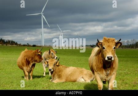 Windenergieanlagen in einem Feld mit Kühen, Ally Mercoeur Windfarm, Département Haute-Loire, Frankreich, Europa - Stockfoto