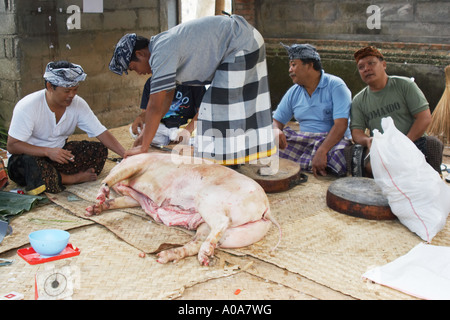 2 Männer ein Schwein Schlachten und schneiden es in