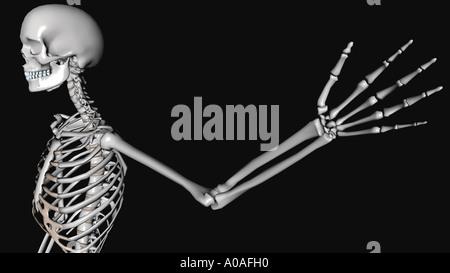 Anschauliches Diagramm Skelett Arm und Hand ausgestreckt Stockfoto ...