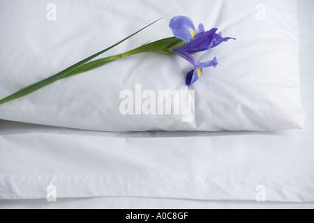 Nahaufnahme von Kissen und Bettwäsche mit Blume - Stockfoto