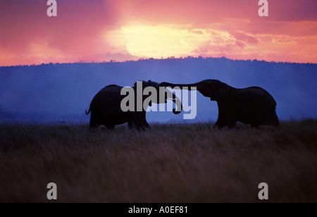 Elefanten Silhouette gegen den Abendhimmel Masai Mara Kenia - Stockfoto