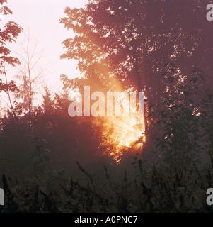 Strahlen der Sonne Strahl durch Bäume bei Sonnenaufgang an einem nebligen Morgen in Burnaby British Columbia Kanada - Stockfoto
