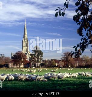 Kathedrale von Salisbury im herbstlichen Abendlicht gesehen von den Auen mit Schafbeweidung im Vordergrund - Stockfoto