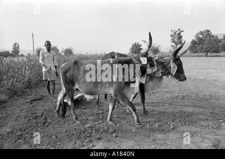 B/W eines Landarbeiters, der das Land zur Vorbereitung auf die Aussaat mit einem Tieftechnologie-traditionellen, - Stockfoto