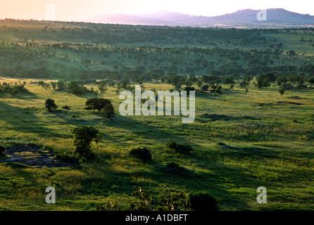 Die Serengeti in der Nähe von Lobo Lodge im Norden von Tansania. - Stockfoto