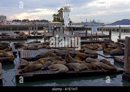 Kalifornien Seelöwen ruhen auf schwimmenden Flöße am Pier 39 San Francisco Vereinigte Staaten von Amerika - Stockfoto