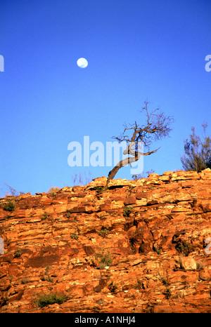 Kings Canyon im Watarrka National Park nördlichen Territorien Australien - Stockfoto