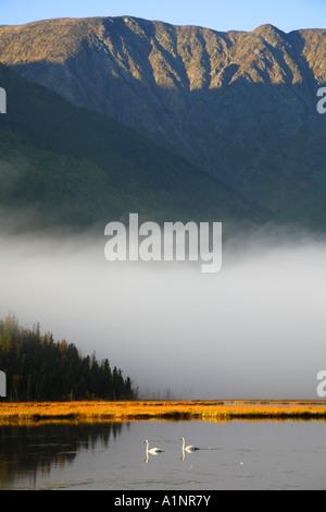 Herbst-Migration von Trumpeter Schwäne Tern Lake Kenai-Halbinsel Alaska - Stockfoto