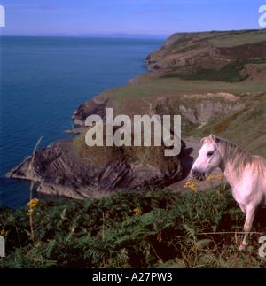 Wildes Pony auf der Llangranog Ceredigion Küste Wales UK - Stockfoto