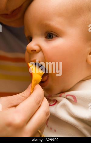 Mango - ihren ersten Geschmack! - Stockfoto