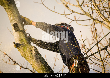 Klettergurt Baumpflege : Baumpfleger in aktion helm ohr protektoren gurt für die sicherheit